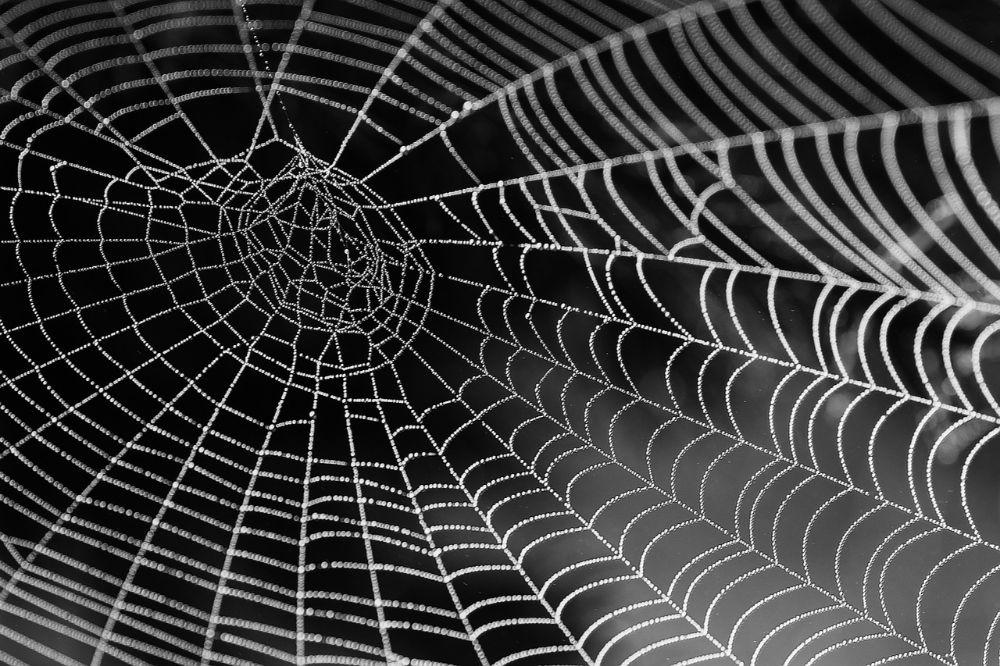 Hoe kan ik mijn spinnenfobie overwinnen